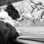 My idea was to take the dog hair movement with street art in the background, integrating these two elements.